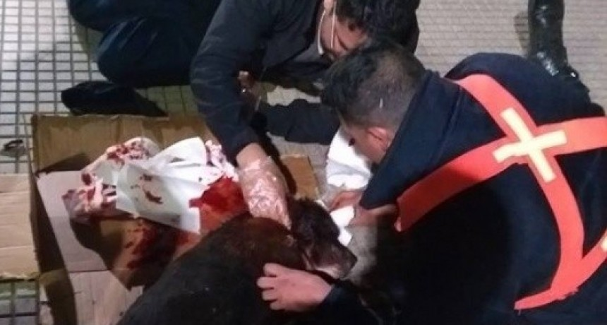 Gran gesto: Policía asistió a un perrito callejero herido