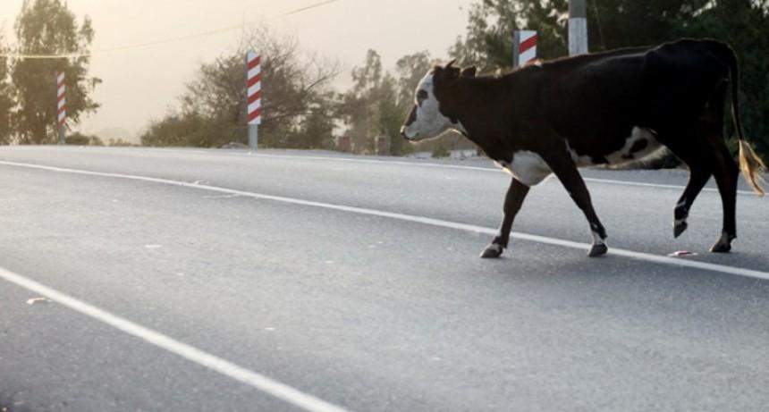 Murió un motociclista al chocar con una vaca