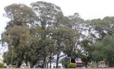 Evalúan los árboles de la plaza de