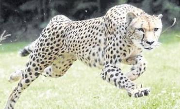Por primera vez clonan en la Argentina un animal en extinción