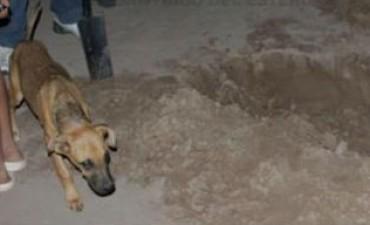 SANTIAGO DEL ESTERO: Un perro desenterró una pierna humana en un baldío