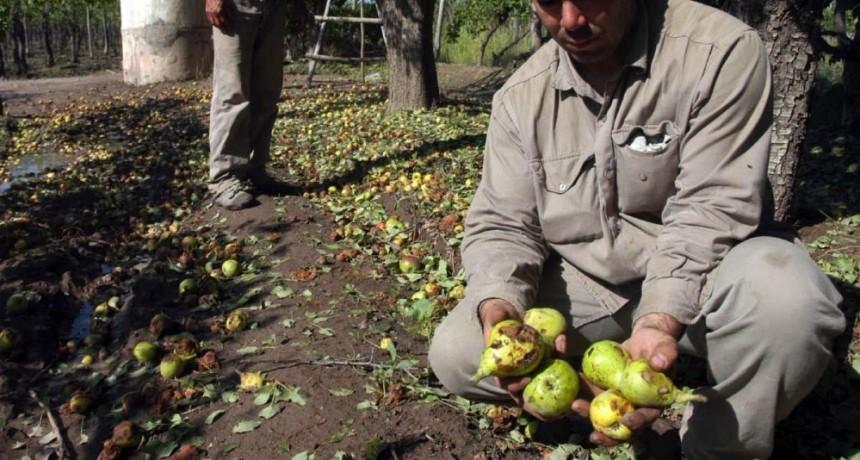 Granizo y tormentas: declararon desastre agropecuario en Río Negro