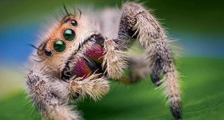 No nos comemos arañas al dormir
