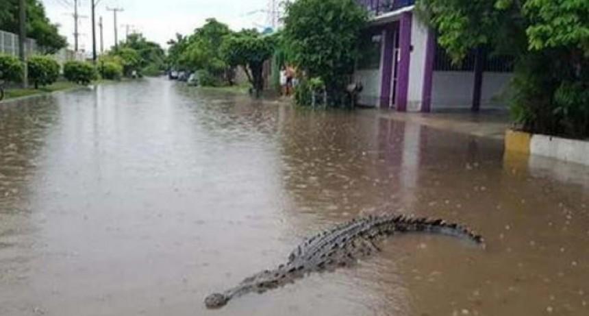 Desbordaron un río y una represa en México y hay cocodrilos en las calles