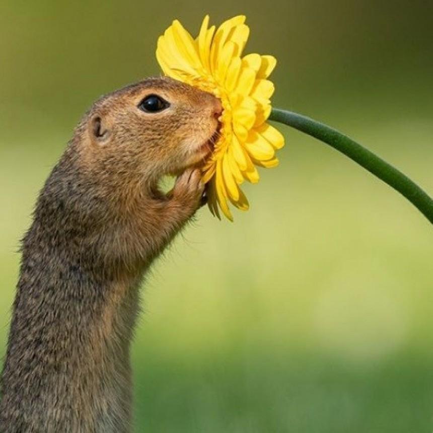 La maravillosa imagen que da la vuelta al mundo: una ardilla oliendo una margarita