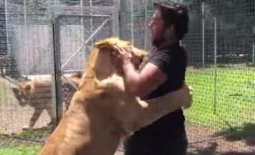 El emotivo encuentro entre una leona y su entrenador