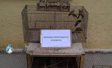 Secuestraron 18 aves canoras que eran comercializadas