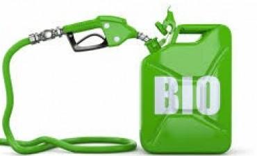 Aumentaría la producción de biocombustibles
