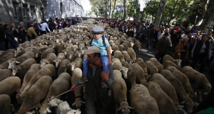 Insólito: ovejas coparon el centro de Madrid