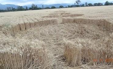 Aparecen extraños círculos en un campo en Salta