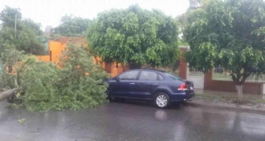 La lluvia torrencial derribó un árbol en La Ermita