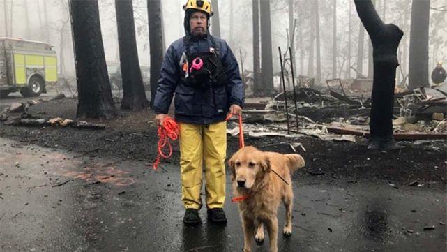 California: Tras controlar el incendio hay 85 muertos y casi 600 desaparecidas