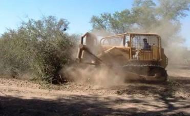 Greenpeace Argentina: La deforestación es una de las principales causas de las inundaciones