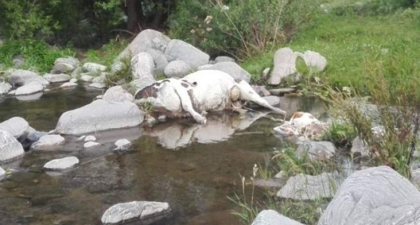Denunciaron la aparición de animales muertos en el Rio del Tala